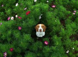 一组超级可爱的小狗狗拍摄图片欣赏