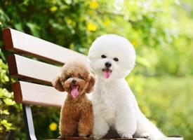 一组充满温情爱意的小狗狗图片欣赏