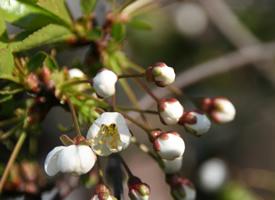 一组唯美的小清新花卉高清图片欣赏