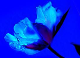 一组唯美蓝色鲜花高清图片欣赏