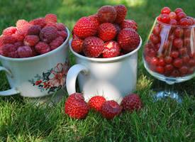 好吃甜润口的红树莓水果图片