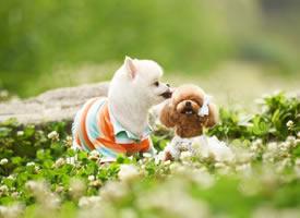 三只可爱的小狗在绿地上的图片
