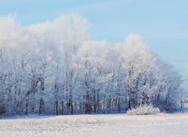 唯美冬日雪景图片高清壁纸