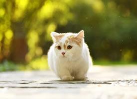 一组超级可爱温顺的小猫图片欣赏