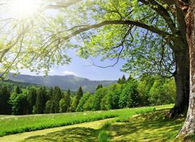 清新唯美自然风景桌面壁纸欣赏