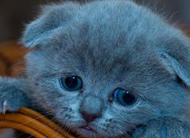 一组可爱萌系猫咪写真图片欣赏