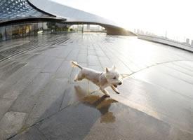 一组奔跑的小狗狗图片欣赏