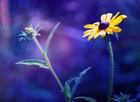 一组小清新植物花卉高清图片欣赏