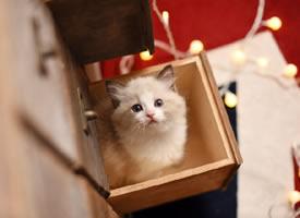 无敌爆炸特别可爱小猫猫图片欣赏