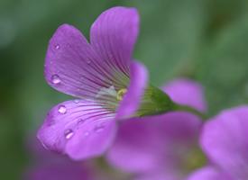 一组清新唯美花卉高清图片欣赏