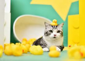 一组超级可爱的大眼睛小猫咪图片欣赏
