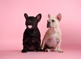 一組超級可愛的黑白配兩只小狗狗圖片