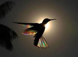 一组在光照耀下五彩缤纷的小鸟