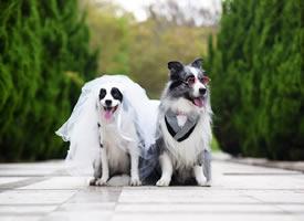 一組超級可愛甜蜜的小狗狗圖片欣賞
