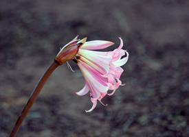 一组超清唯美花卉图片欣赏