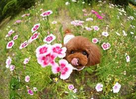 一組各式各樣的小狗狗圖片欣賞