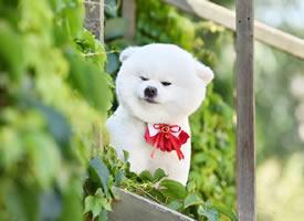 一組超級可愛在綠葉里的小狗狗圖片