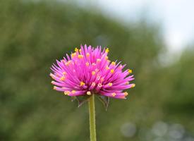 清新养眼的花朵图片高清壁纸