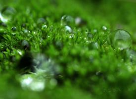 綠色植物高清圖片桌面壁紙