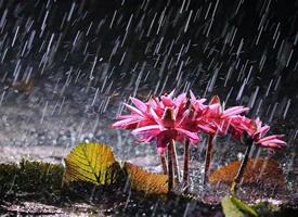一组夏日雨天的唯美风景图片欣赏