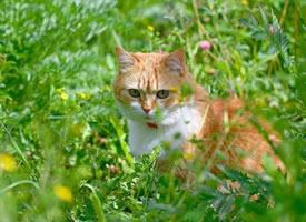 一组可爱小猫咪的夏天拍照时间