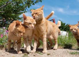 来自橘猫的凝视,大橘已定,眼神很是凶猛