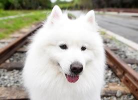 一组有着白色毛毛的小狗狗图片