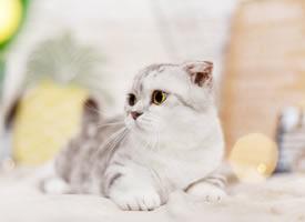 一组特别会卖萌的小猫咪图片