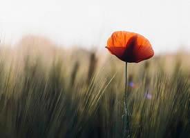 愿每身孤独都拥抱共鸣,愿衣襟带花,愿