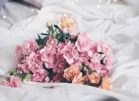一组粉色系治愈系花朵图片欣赏