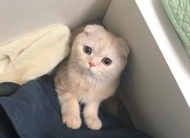 一组超可爱橘猫的日常图片