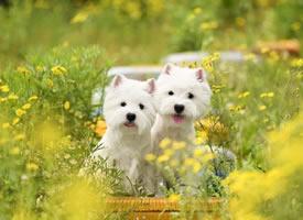 绿色草里的一抹白 小可爱