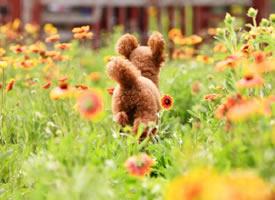 一组超级可爱在花丛中的小狗狗