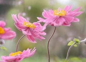 春天唯美小花微距摄影图片壁纸