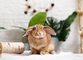 兩只小兔紙,完了完了,過分可愛