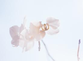 一组清新淡雅花卉高清图片欣赏