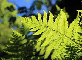 一組綠色護眼植物高清圖片欣賞