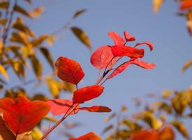 秋天來了唯美自然風景圖片欣賞
