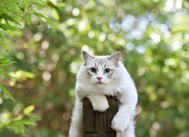 一组美丽的小猫猫图片欣赏