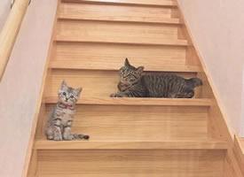 两只超可爱的大胖猫和小瘦猫