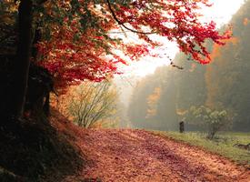 一組唯美秋季風光高清圖片欣賞