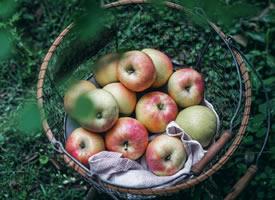 一组红彤彤意境美的苹果图片