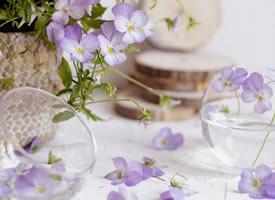 一組美美的鮮花特色圖片欣賞