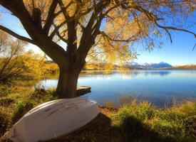 清新唯美自然的树木图片欣赏