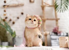 一组乖巧甜美的小可爱猫猫图片
