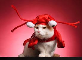 一組超級可愛呆萌的小貓咪圖片欣賞