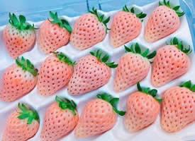 這組草莓擁有草莓屆最高顏值
