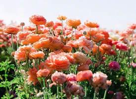 满地都盛开着唯美的花束图片欣赏