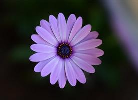 漂亮微距花卉摄影高清图片欣赏