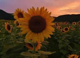 做自己的太阳,与山川湖海为伴